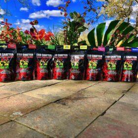 CBD Shatter 1g Full Selection by CBD Lion
