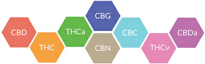Endocannabinoid Hexagonal Chart